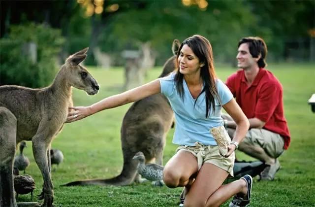 澳洲生活 选择移民澳洲