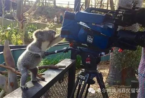 考拉玩摄像机